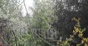 Vanzare teren intravilan în Baneasa